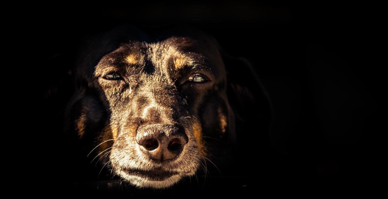 Opie Dog